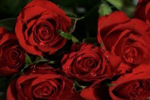 roses-1131017_960_720